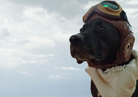 Dog Pilot_background