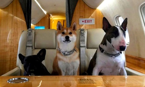 Dogs on jet_Marc Jacobs