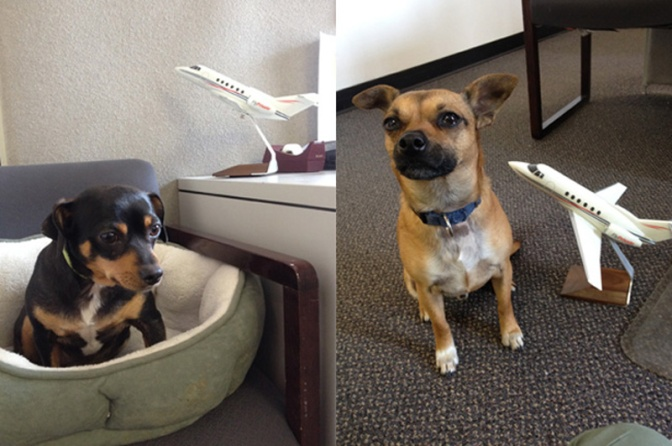 Happy #NationalDogDay from our Mascots!